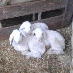 Tiere am Bauernhof_2